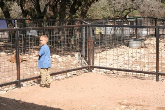 Luke in the petting corral