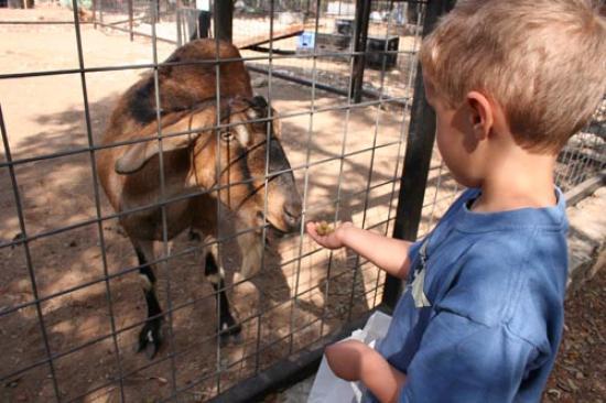 Luke feeds a goat