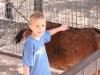 Luke pets a goat