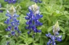 easter-eggs-and-wildflowers-041