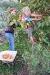 Climbing the fruit tree