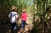 Corn maze