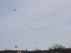Kites in the sky 3