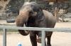 Elephant exhibition