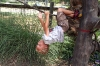 Swinging like a sloth